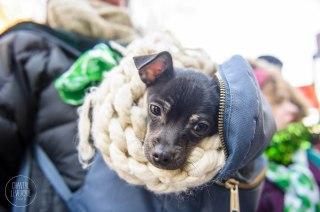 SPCA-St-Patrick-parade-6143