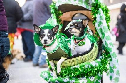 SPCA-St-Patrick-parade-6186