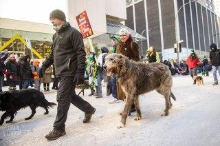 SPCA-St-Patrick-parade-6334