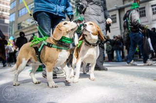 SPCA-St-Patrick-parade-6358